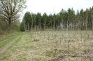 Neuanpflanzung an der Unteren Viehweide