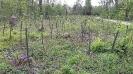 Eine Neuanpflanzung