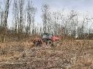 Nach den Baumfällarbeiten